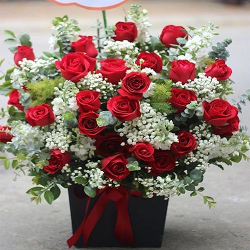 hoa hồng chúc mừng khai trương
