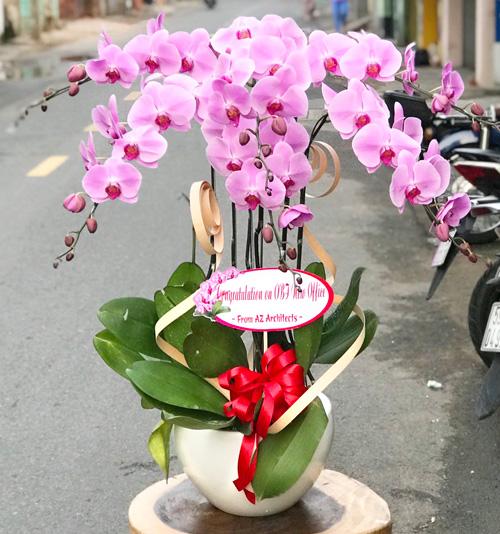 Chậu hoa Lan Hồ Điệp tại shop hoa tươi Bến Tre
