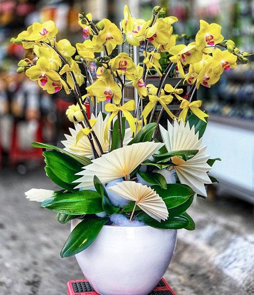 Chậu hoa lan hồ điệp tại shop hoa tươi Bắc Tân Uyên