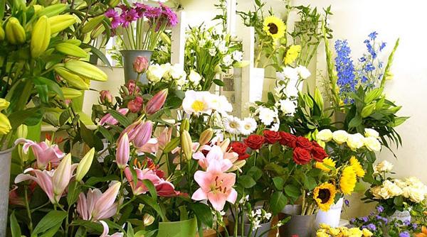 Shop hoa tươi Cao Bằng