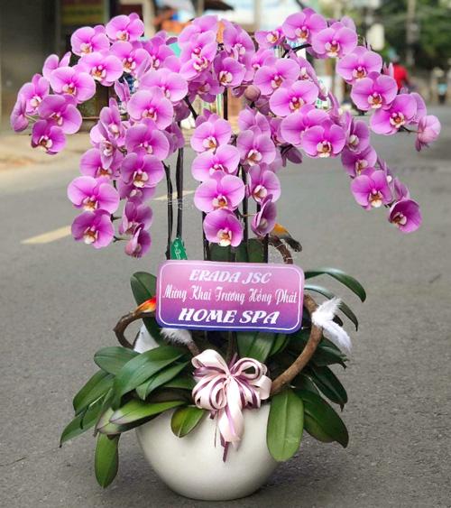 Chậu hoa lan hồ điệp tại shop hoa tươi Đăk Nông