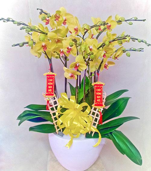 Chậu hoa lan hồ điệp tại shop hoa tươi Thống Nhất