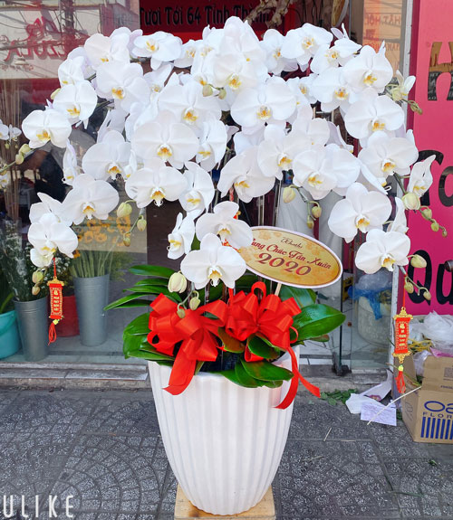 Chậu hoa Lan Hồ Điệp tại shop hoa tươi Hà Nam