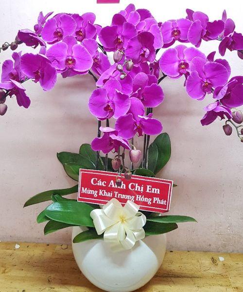 Chậu hoa lan hồ điệp đẹp tại shop hoa tươi Hậu Giang