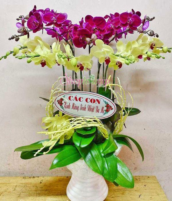 Chậu hoa Lan Hồ Điệp tại shop hoa tươi Khánh Hòa