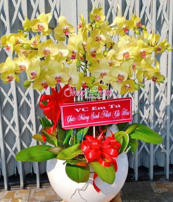 Chậu hoa Lan Hồ Điệp tại shop hoa tươi Kon Tum