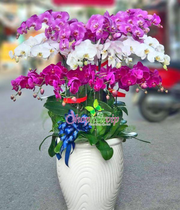 Chậu hoa Lan Hồ Điệp tại shop hoa tươi Lạng Sơn