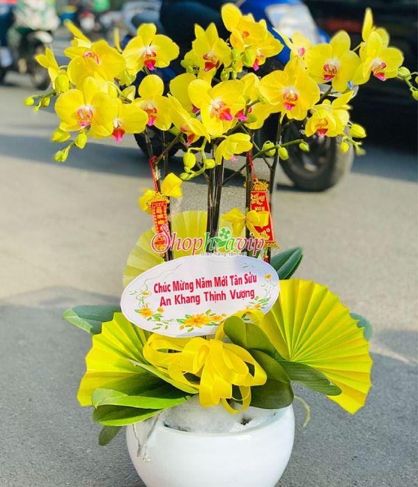 Chậu hoa Lan Hồ Điệp tại shop hoa tươi Lào Cai