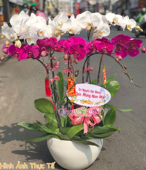 Chậu hoa Lan Hồ Điệp tại shop hoa tươi Quảng Ninh