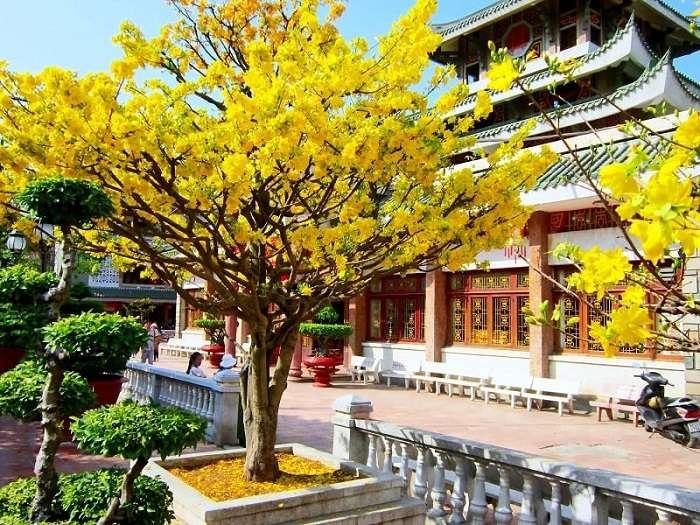 Cách đây hơn 3000 năm, cây mai đã có ở Trung Quốc.