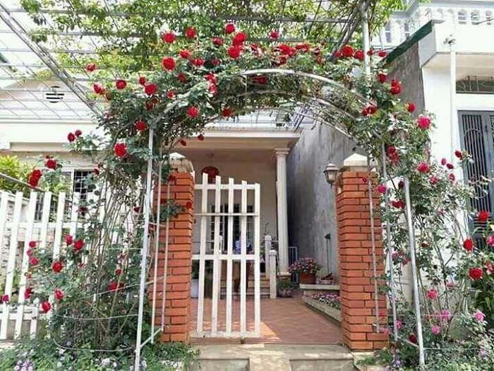 Hoa hồng cổ dùng để trang trí