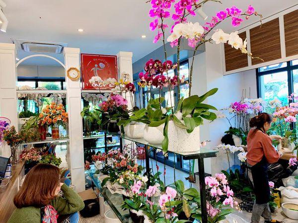Shop Hoa Vip - Địa chỉ bán hoa lan hồ điệp chất lượng, uy tín